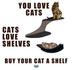 CoolKittyCondos offer shelves and perches for the cat in your life. Visit us now. Love Shelf, Cat Wall Shelves, Living With Cats, Cat Perch, Cat Furniture, Cat Love, Animals And Pets, Fur Babies, Dog Cat