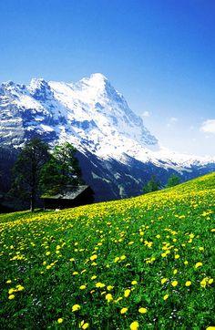 Alpine Mountain Range, Switzerland   - Top 10 Beautiful Mountains Around The World