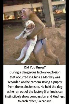 Monkey Rescues Dog