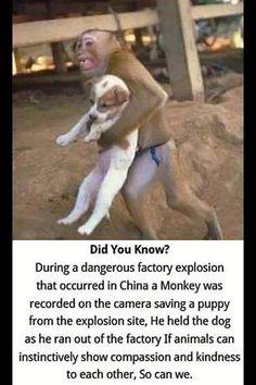 Monkey Rescues Dog