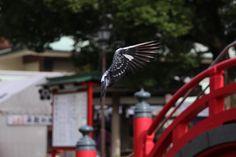 Frozen in time - A pigeon flying at a temple in Tokyo.  A moment frozen in time.