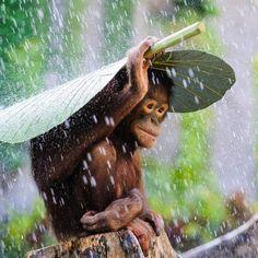 Adorables clichés qui nous viennent du monde entier et qui ont été sélectionnés par le magazine National Geographic. Comme toujours les photos sont superbes! Des animaux incroyablement beaux……