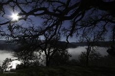 Sun and fog and lake and trees by SamuelNesbitt