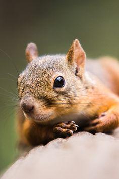 **Squirrel!