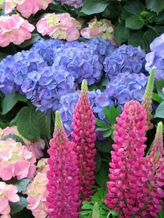 Lupine and Hydrangea flowers Diy Kits For Adults, Flower Art Images, Rose Cottage, Parcs, Diy Dollhouse, Something Beautiful, Creepers, Hydrangea, Beautiful Flowers