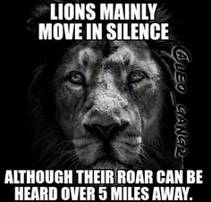 Lions move in silence.