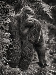 On This Earth, A Shadow Falls: Nick Brandt: