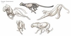 Image result for anatomy of a cheetah, I think the pose of the one on the far left is interesting.