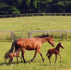 Twins.  Very rare that twin foals live.  Usually at least one dies shortly after birth because horses were not designed for multiple births.