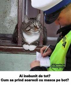 Lol, Humor, Memes, Cats, Funny, Mascaras, Gatos, Humour, Meme