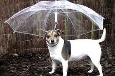 (PHOTO: Amazon.com)  Crazy inventions you need now:  Dog umbrella  You might have thought that dogs are capable of getting wet and just shaking it off, but if you're worried that your pampered pooch is suffering, you can invest in a dog umbrella. These are held by the owner, with an upside-down shade to hold over your dog in inclement weather. These bargains are available for $8.99 on Amazon.com.
