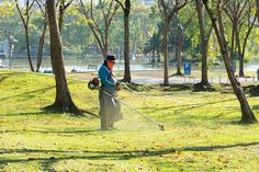 If you are planning to make some landscaping in your garden area then you need to prune the trees and make some grass carpet on the garden. Grass Carpet, Bushes And Shrubs, Garden Landscaping, Garden Tools, How To Find Out, Home Improvement, Landscape, Tips, Stuff To Buy