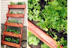 <b>Whether you have a sprawling backyard or a tiny windowsill, these garden projects will put a ~spring~ in your step.</b>