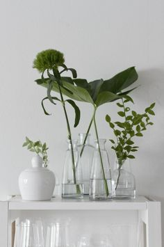 fresh white and forest green. Indoor plants and cactus. An assortment of different house plants and foliage. Green rooms and rooms with potted plants. Green Plants, Green Flowers, Cut Flowers, Indoor Garden, Indoor Plants, Potted Plants, Grand Vase En Verre, Decoration Plante, Deco Floral