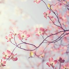 The color of #spring Pink of course!
