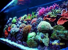 Top 10 Reef Tanks - Rate My Fish Tank. Stunning colors!
