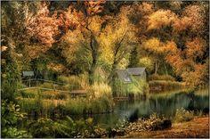 Hidden Photo by Gabor Dvornik — National Geographic Your Shot