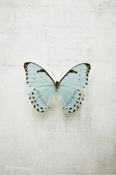 I don't like truth, ...EASTERN design office - butterfly