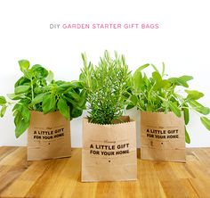More homemade gift ideas.these herb filled gift bags would be great for gardeners and chefs alike and can work as holiday, birthday, housewarming or hostess gifts. Creative Wedding Gifts, Wedding Gifts For Parents, Suculentas Diy, Farm Stand, Romantic Gifts, Little Gifts, Homemade Gifts, Gift Bags, Organic Gardening
