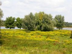 another scene from the Netherlands (Maas en Waal) that looks like the area around the ponds