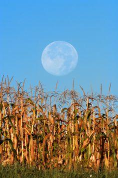 Harvest Moon by Larry Landolfi