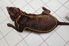 Fat dog Romeo is taking part in PDSA Pet Fit Club