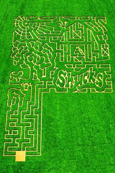 treinen farm in lodi is a fun hobby farm with corn maze pumpkin