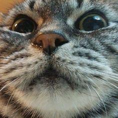 Cat #2 doc