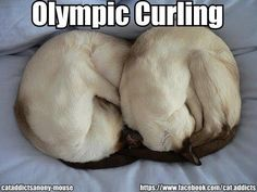 olympic's part 5 I Love Cats, Cute Cats, Funny Cats, Animals And Pets, Funny Animals, Cute Animals, Funny Animal Photos, Funny Pictures, Crazy Cat Lady