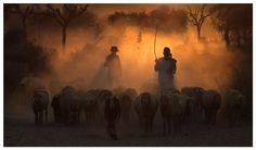 Shepherd Photo by tarun chhabra -- National Geographic Your Shot