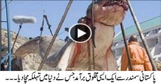 Amazing Video: A Strange Creature Found Near Pakistani Sea