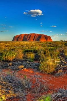 Uluru - Ayers Rock, Australia   - Explore the World with Travel Nerd Nici, one Country at a Time. http://TravelNerdNici.com