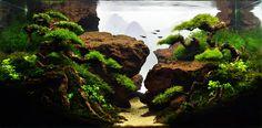 Planted Tank jurang mayit by herry rasio - Aquarium Design Contest | Aquascape Awards