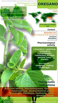 Oregano benefits. Infographic. Summary of the general characteristics of the Oregano plant. Medicinal properties, benefits and uses more common. | herbology, herbalism, healing plants, herbal medicine