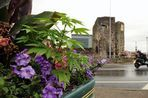 Cannabis plants found growing in Newport Council flower pots