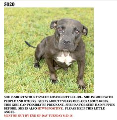 T, Grable Brazoria County Sheriff's Office Livestock and Animal Control Division Angleton, TX  ( Brazoria County) Location:  45 Minutes South Of Houston, Tx   PH:   979-388-2365 Cell : 979-997-2486