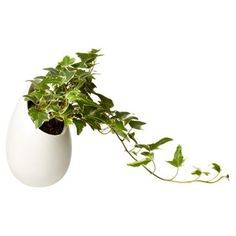 Check out this item at One Kings Lane! Space Egg Planters, Asst. of 2, Live
