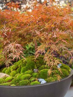Mix It Up with Moss #japanesegardendesign