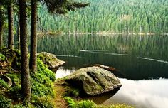 Ancient Bohemian Forest Known as Šumava Where Celts Once Roamed