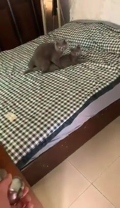 Privacy please - Funny Animals - Cute Funny Animals, Funny Dogs, Cute Cats, Haha Funny, Funny Cute, Cute Animal Pictures, Funny Pictures, Funny Video Memes, Stupid Memes