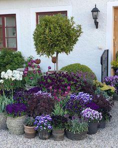Back Gardens, Small Gardens, Outdoor Gardens, Backyard Garden Design, Backyard Landscaping, Pot Jardin, Garden Cottage, Garden Planters, Garden Shrubs