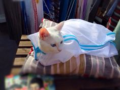 cat 2014年06月 : ねこごち