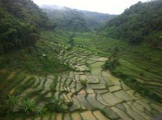 Rice terrace in Bandung