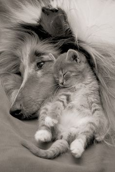 Sweet Dreams and Cuddles Wonderful Friends:)