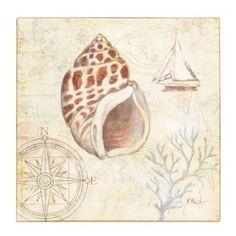 Discovery Shells III Canvas Art Print | Kirkland's