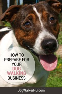 Tips to make the transition to full-time dog walker a little easier!