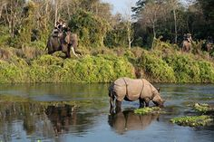 Nature and Jungle safari tour in Nepal is another popular activities for tourist. The vast diversity of Nepal offers oppertunity to explore the World's rare and common wild animals, birds, plants, butterflies and other creatures with in very short distance