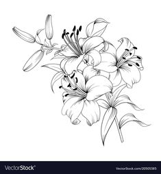 Contour of blooming lily isolated over white background. - Contour of blooming lily isolated over white background. Flower Line Drawings, Flower Sketches, Art Drawings, White Lily Flower, White Lilies, Lilies Drawing, Floral Drawing, Lily Tattoo Design, Flower Coloring Pages