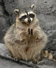 Animal Life ‏@fabulousanimals   If you're happy and you know it clap your hands