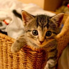 Vamos jogar! ... - Meow Moe